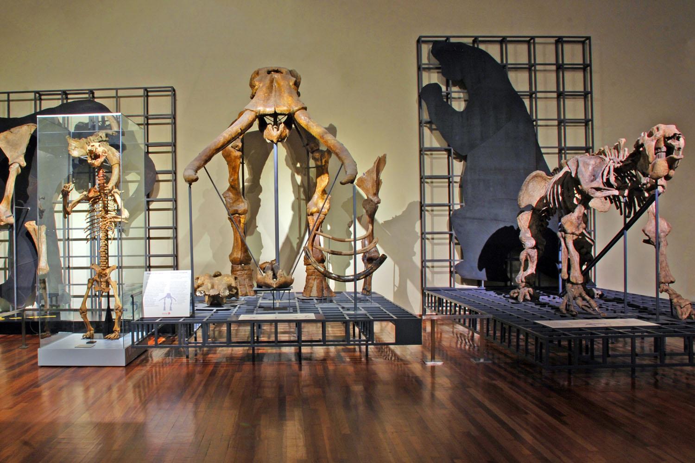 Actividades para todos en el Museo de Ciencias Naturales