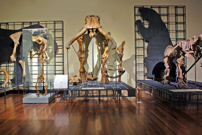 Visita virtual al Museo Nacional de Ciencias Naturales