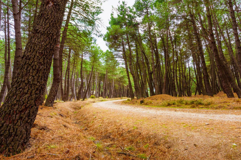 Inteligencia turística en el Parque Nacional de la Sierra de Guadarrama