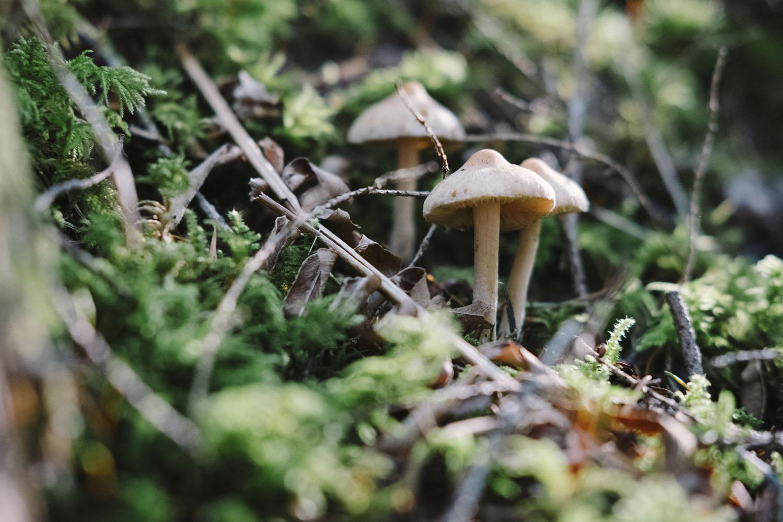 VII Jornadas Micológicas de la Sierra de Guadarrama